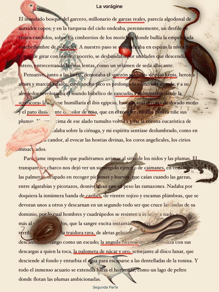 fauna en la voragine © catalina lopez arango.jpeg