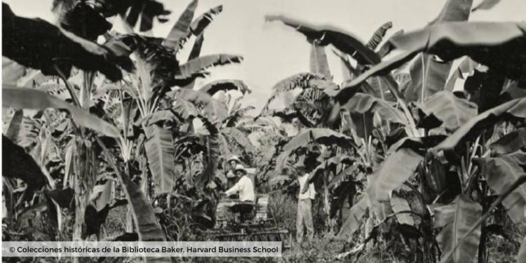 la plantacion bananera